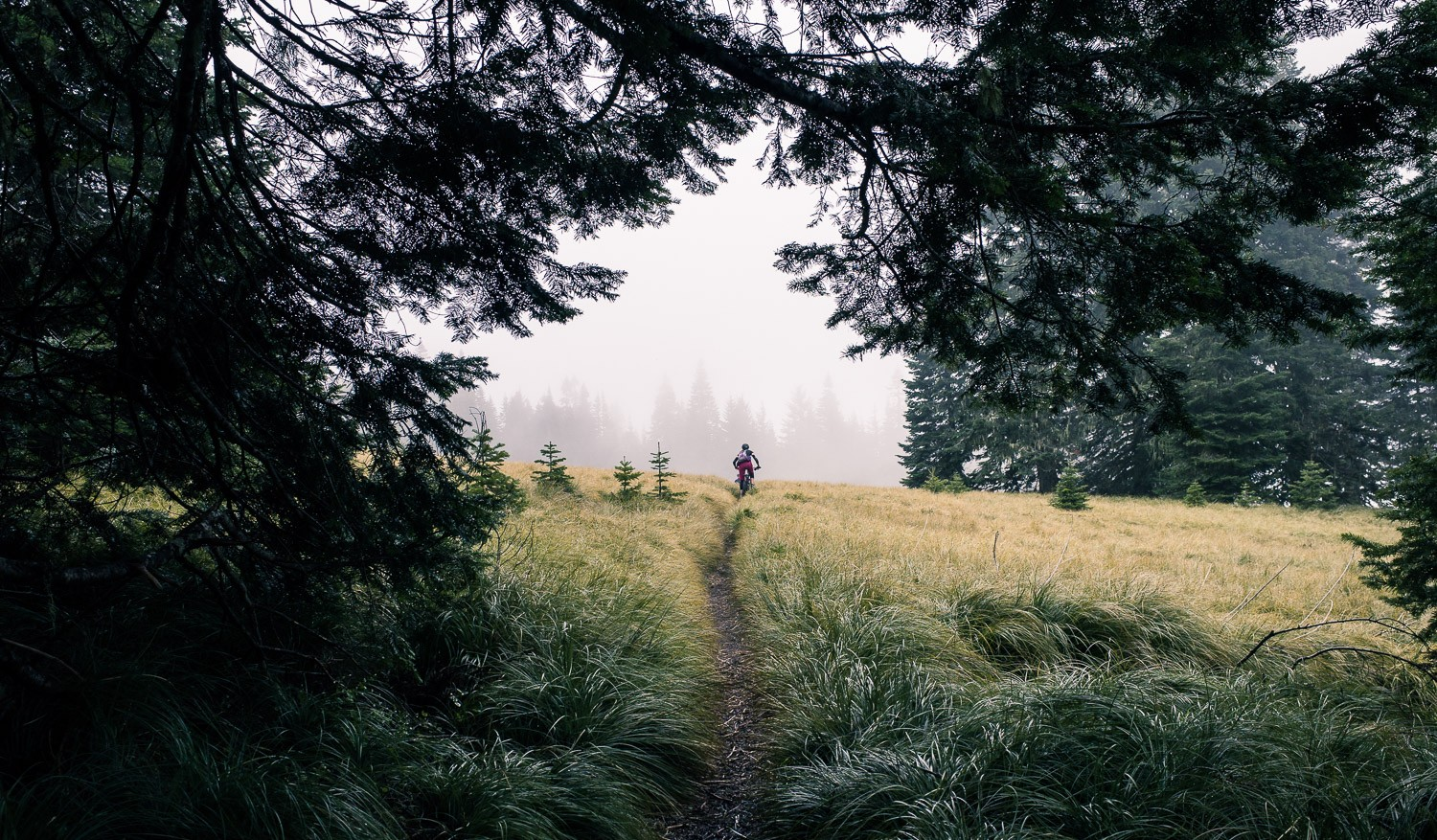 a single track through a meadow in Oakridge, Oregon